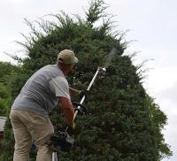 Ortega Greenwood Landscaping - Evergreen Hedging